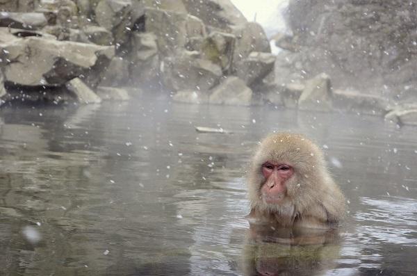 関西北摂近辺のオススメ温泉情報 ~スーパー銭湯に限る~